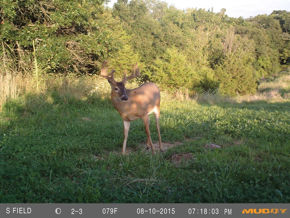 Trail Cameras | Muddy Outdoors | Muddy Outdoors