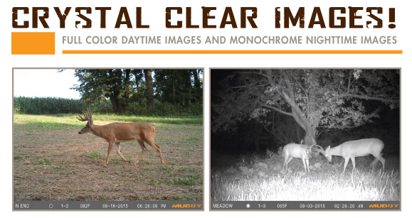Patterning Buck with Muddy Trail Cameras