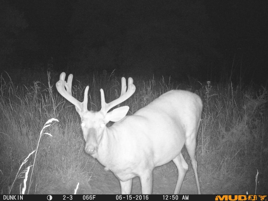 What To Do With Your Trail Cameras This Summer | Run A Survey ...