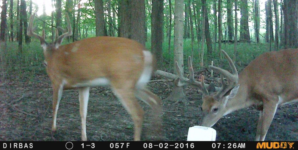 scouting for deer with trail cameras on public land muddy outdoors