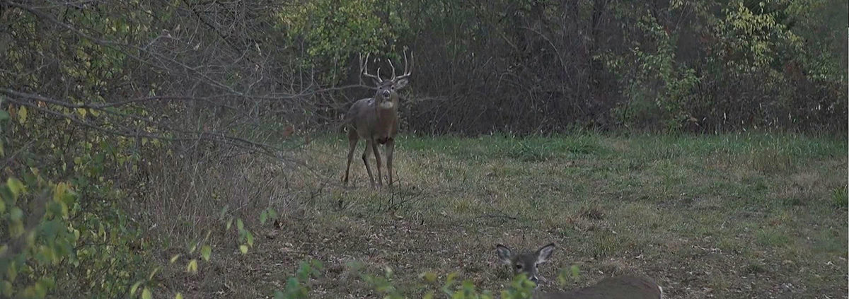 hunting the rut lockdown phase | Muddy Outdoors