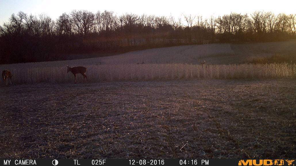 tips-scouting-for-deer-post-season_pic2