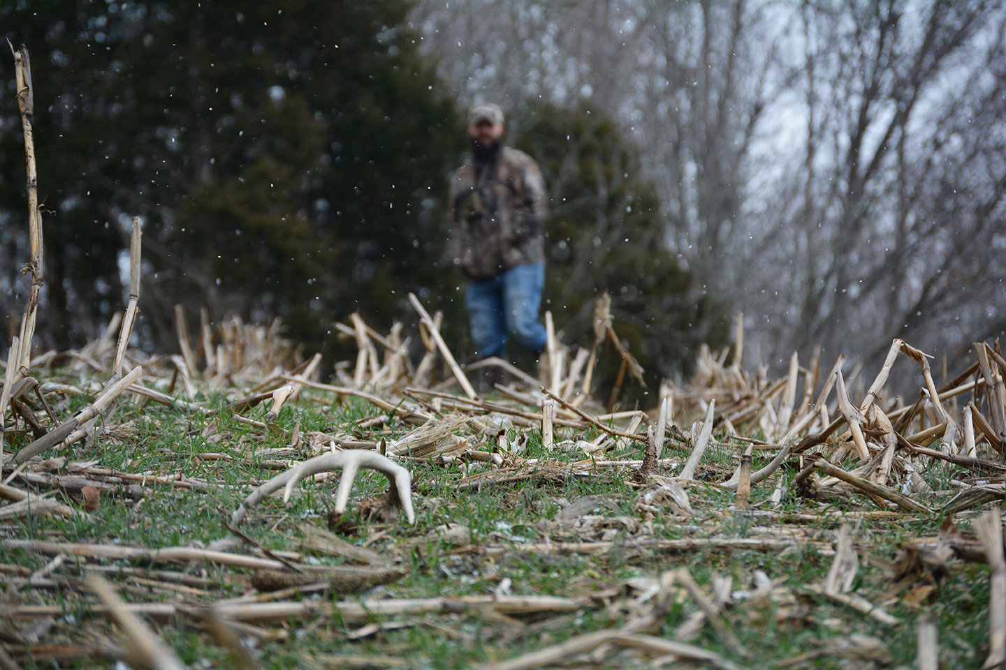 Top 6 Best Places To Find Shed Antlers Muddy Outdoors