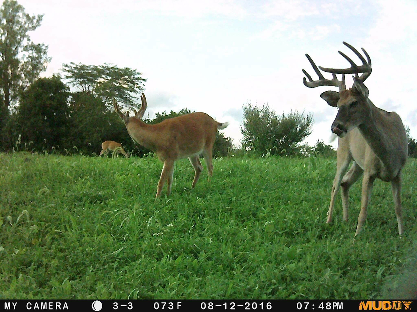 food plots for deer Archives | Muddy Outdoors