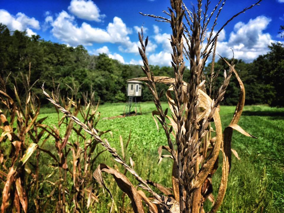 Planning And Hunting Food Plots In The South Muddy Outdoors