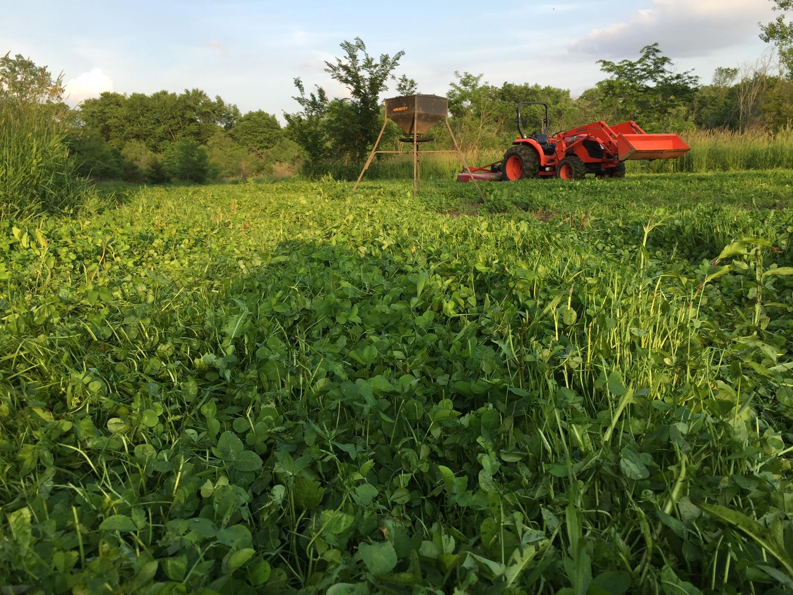 Planning and Hunting Food Plots in the South | Muddy Outdoors