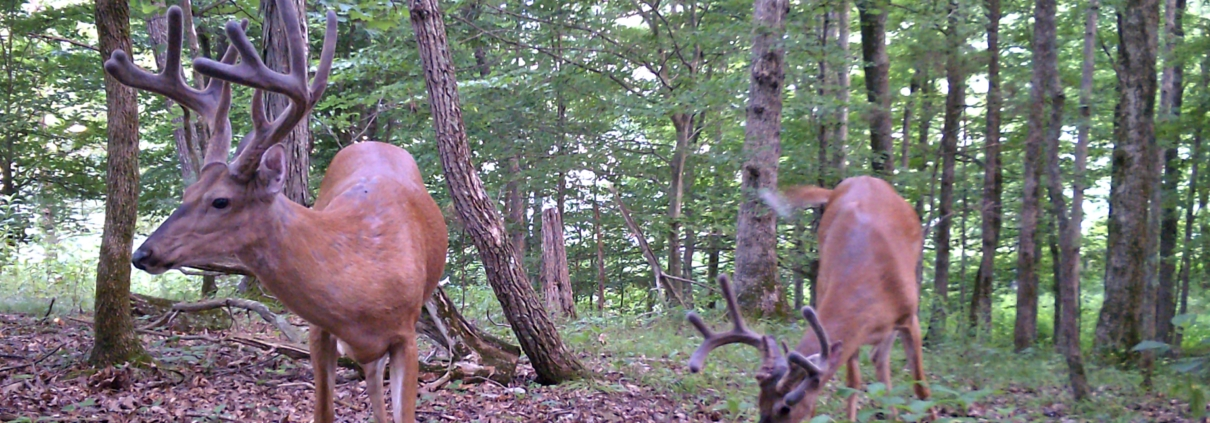 5 Ways To Locate Amp Pattern Your Top Hit List Buck Muddy